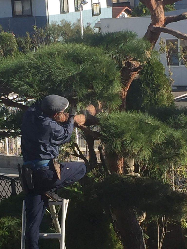 剪定して一番喜ばれる樹木は、、、