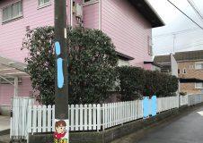 追加作業で【駐車場~道路 / 庭】も小さく剪定しました
