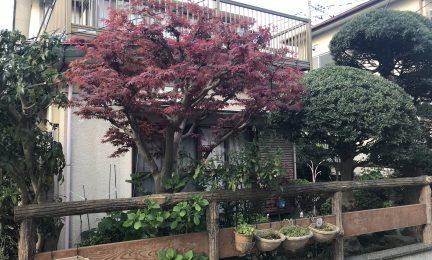 家族の思い出の庭 – 管理