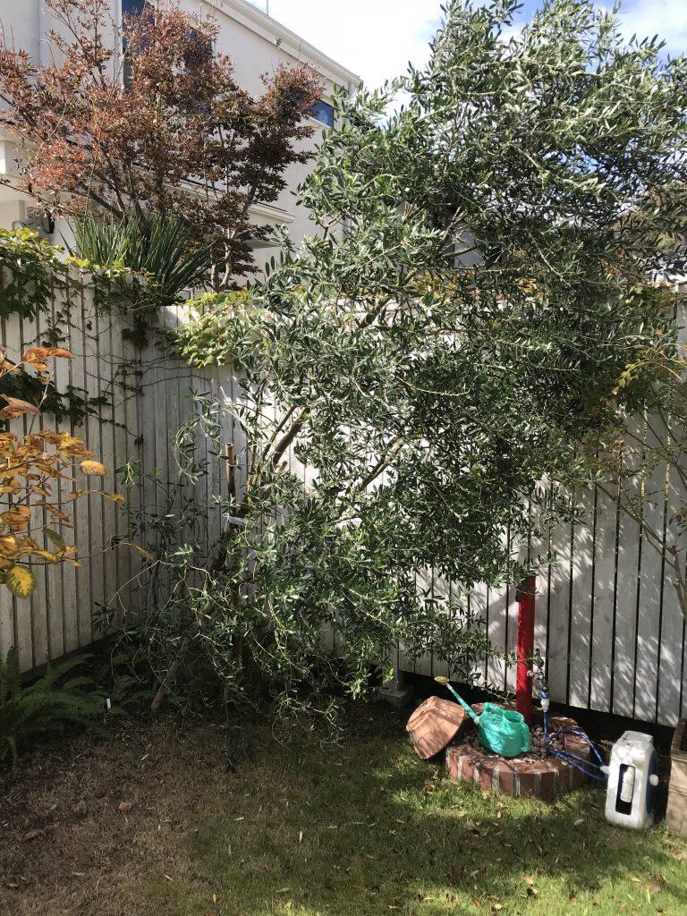 台風24号の影響で樹が倒れ。業者の対応力が分かる瞬間
