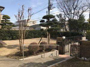 藤沢市 庭木移植作業② 冬の寒さ対策
