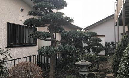 仕立てモノ(庭園用整形)樹木主体の庭 手入れ