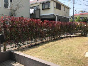 茅ケ崎市/5年以上熟考しましたが潮彩庭縁に頼みたい! レッドロビン生垣の造設