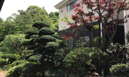 横浜 瀬谷区 春秋の植栽管理