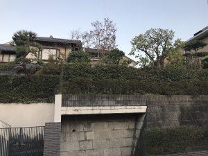横浜市泉区 花壇を造らせて頂いたお庭の手入れ/剪定