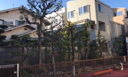 東京都北区 ふくし幼稚園の庭木を剪定