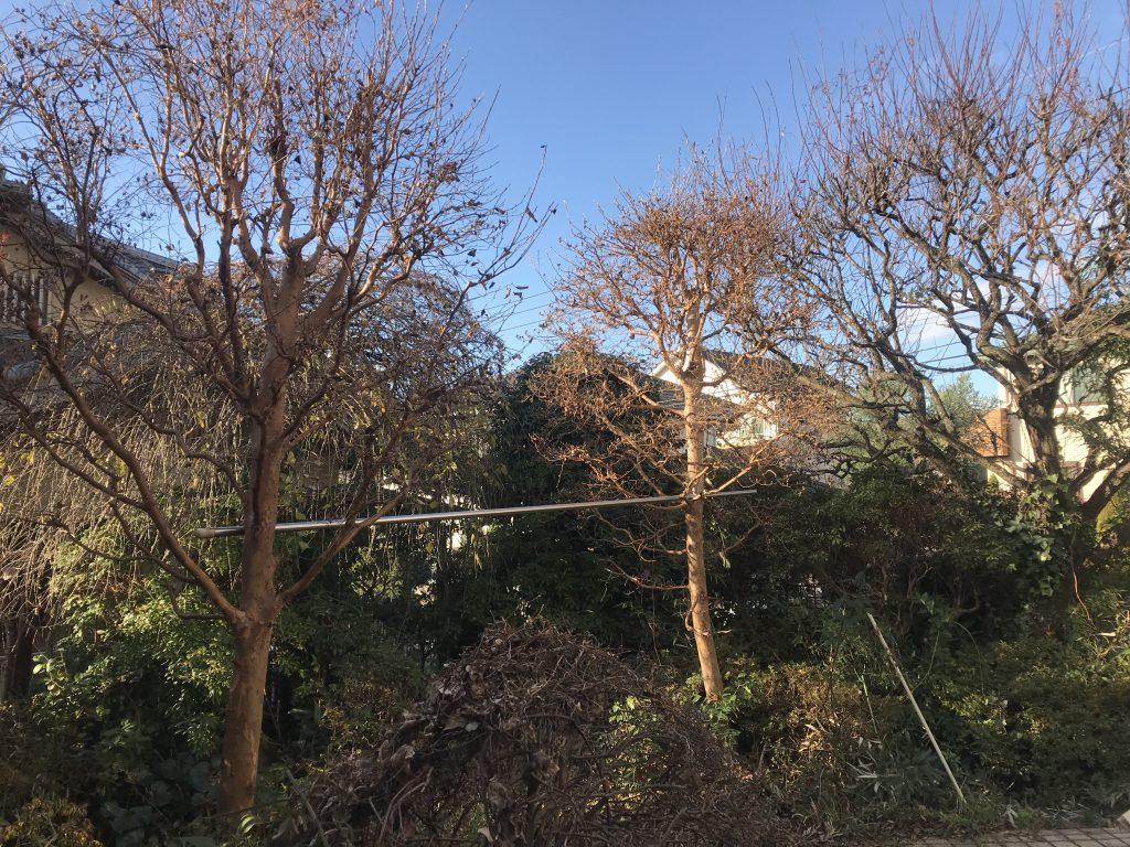 横浜市戸塚区にて庭手入れ。2020年の締めくくりに心もリフレッシュ