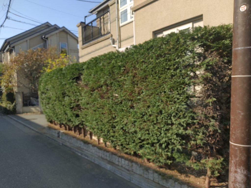 横浜市 泉区 潮彩庭縁は評判がよいので剪定依頼しました。