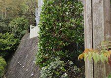 神奈川県葉山町 潮彩庭縁さんはいつも隣家さんと上手に対応してくれるから評判良いですよ!